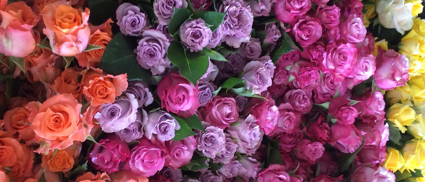 Rosen aus der Gärtnerei